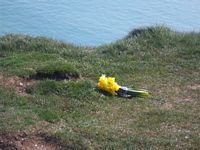 flowers at Beachy Head